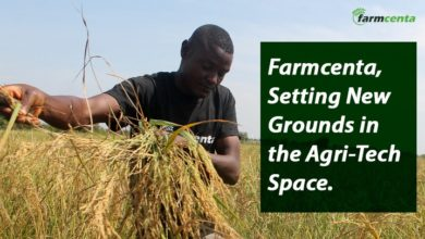 Farmcenta, an agri-tech company in Nigeria