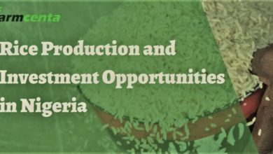 Farmcenta rice investment