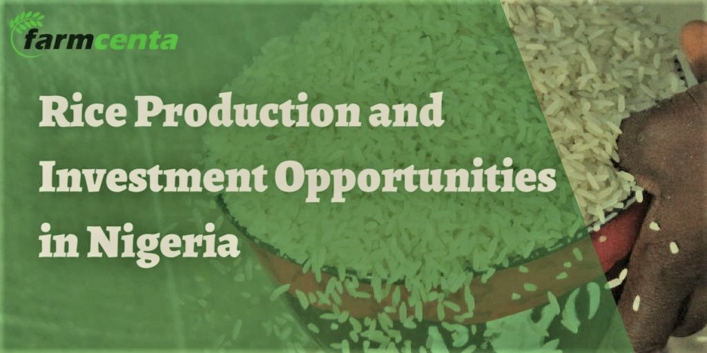 Rice Production and Investment Opportunities in Nigeria