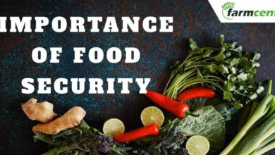 Importance of Food Security