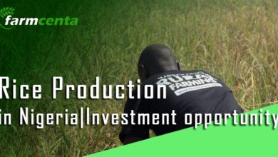 Agric-tech company in nigeria
