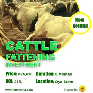 Farmcenta Cattle Fattening Investment Now Selling
