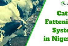 Farmcenta cattle fattening investment