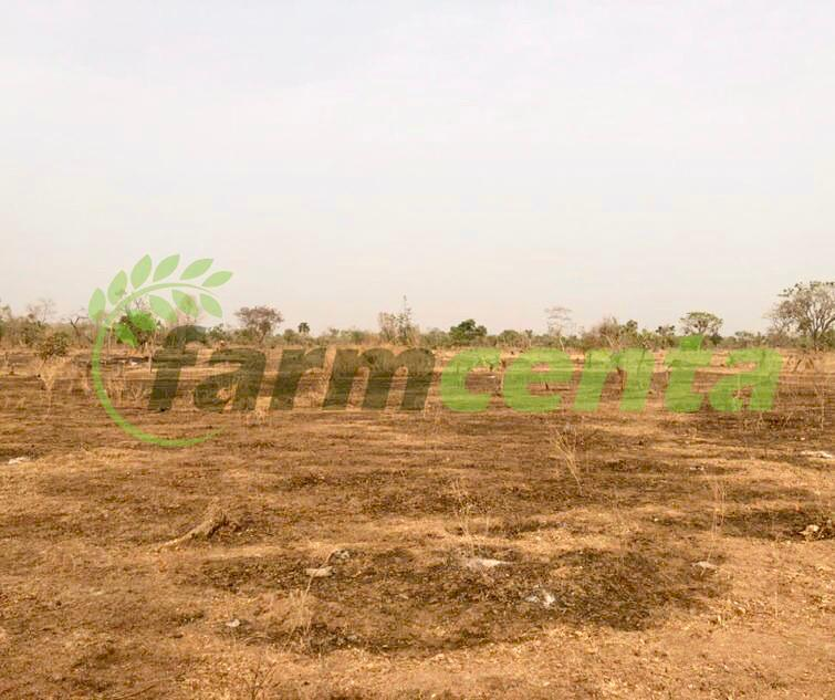 Pictures of the 300 hectares of farmland secured by Farmcenta in Aguatashi, Nasarawa State