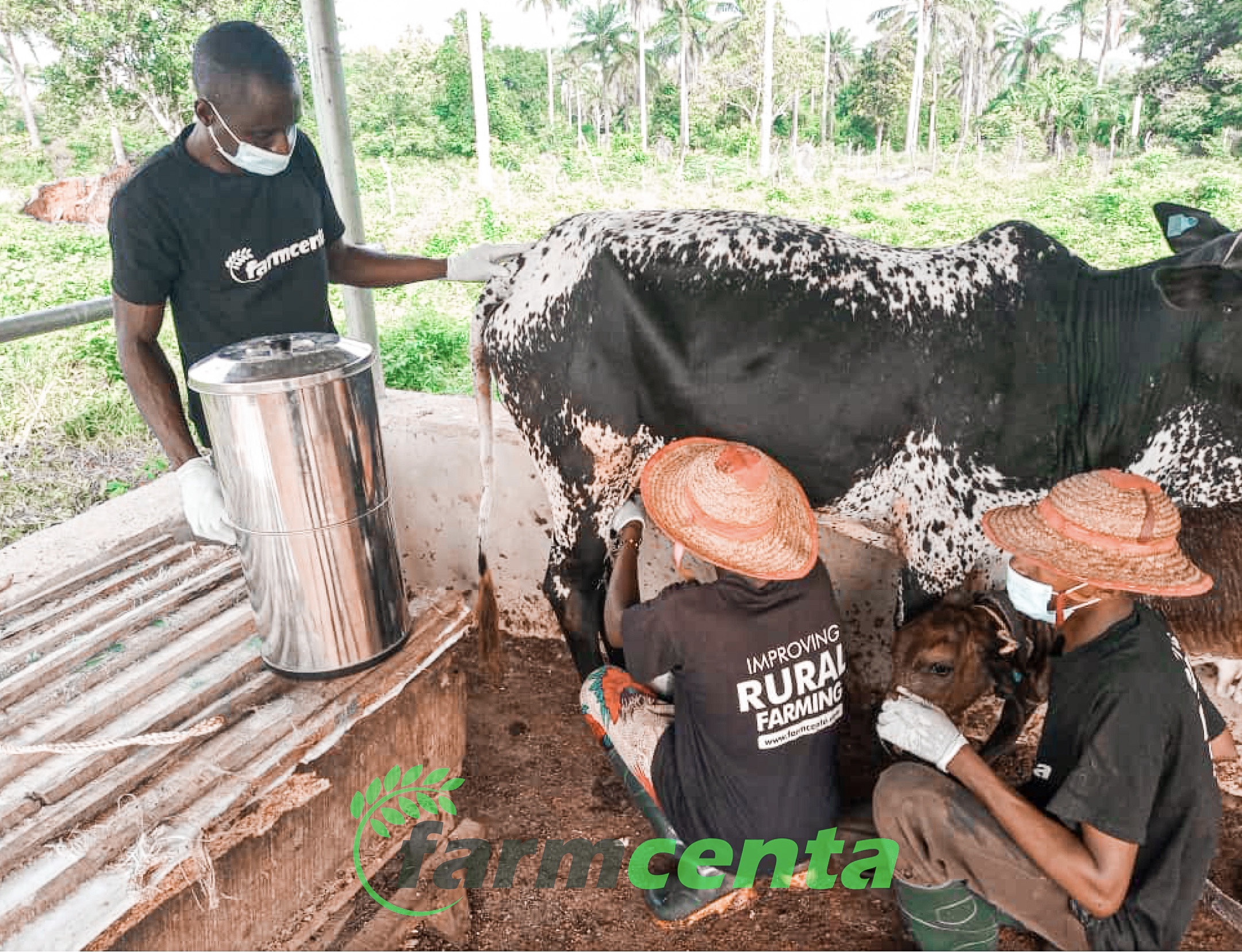 What you need to know about dairy farming in Nigeria
