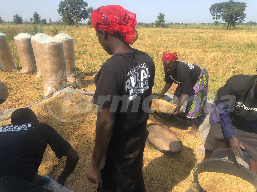 Rice Production in Nigeria