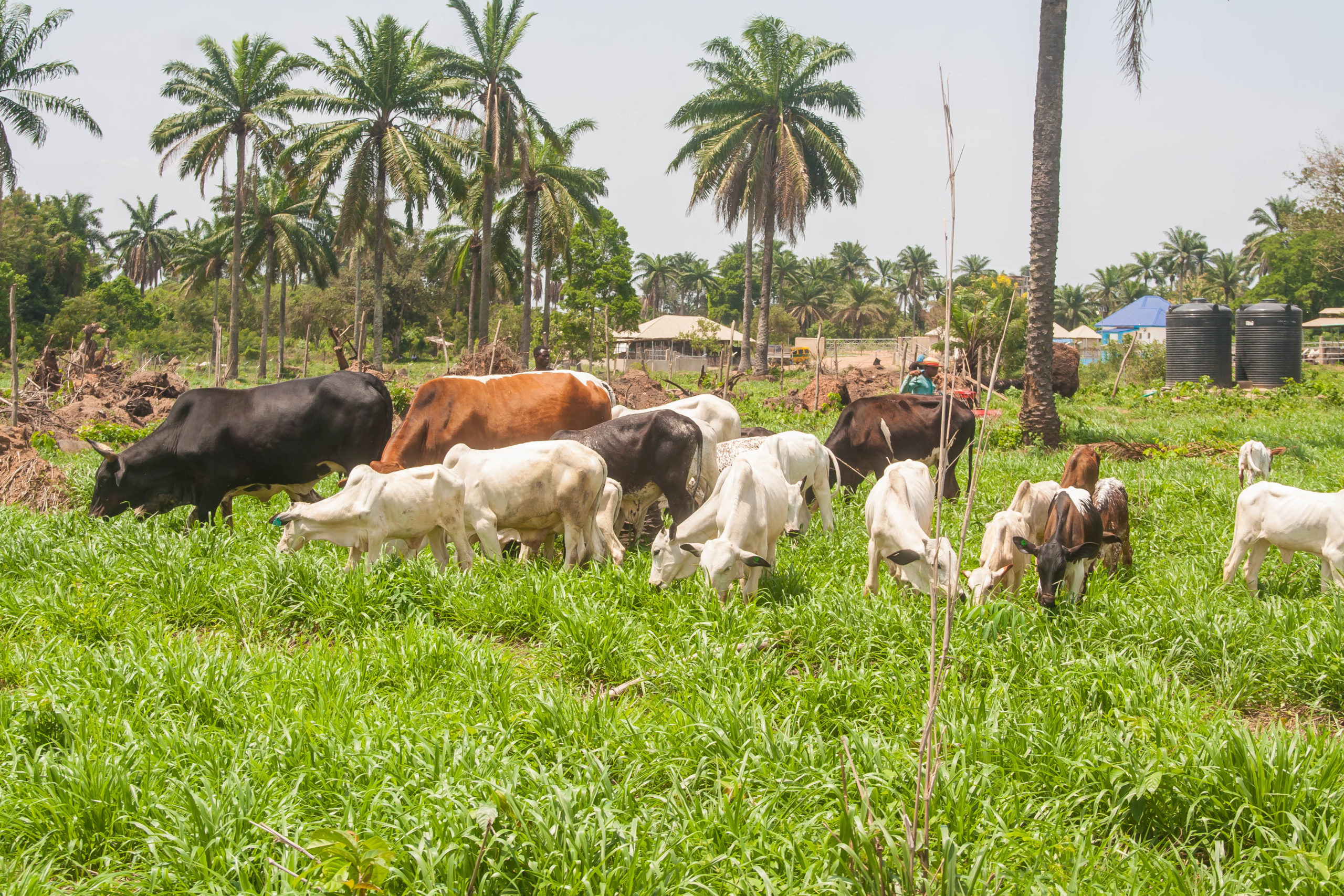 Sustainable Agriculture In Nigeria