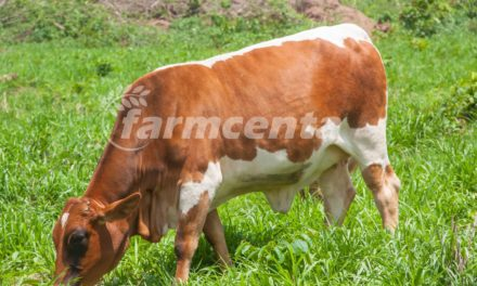 Dairy production in Nigeria: challenges and prospects